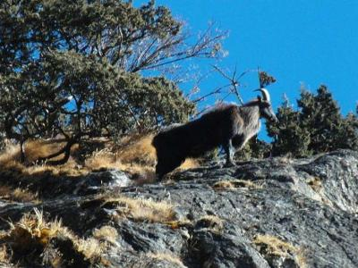 Dhorpatan hunting reserve tour